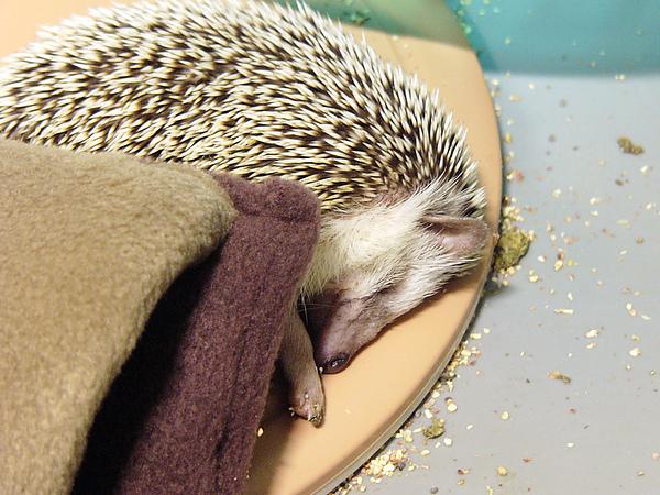 黑寶在保溫墊上睡