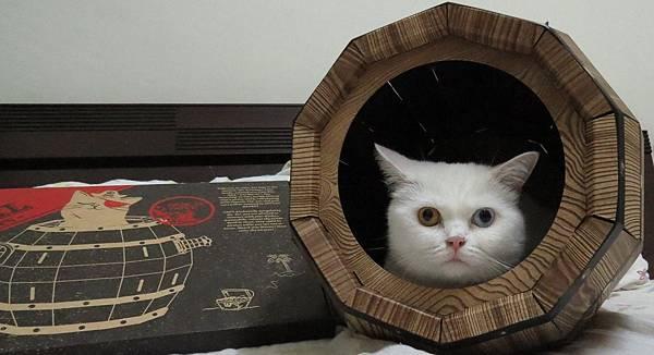 瘋狂貓咪桶2