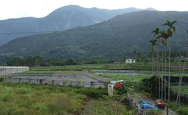 天山嶺有機農場
