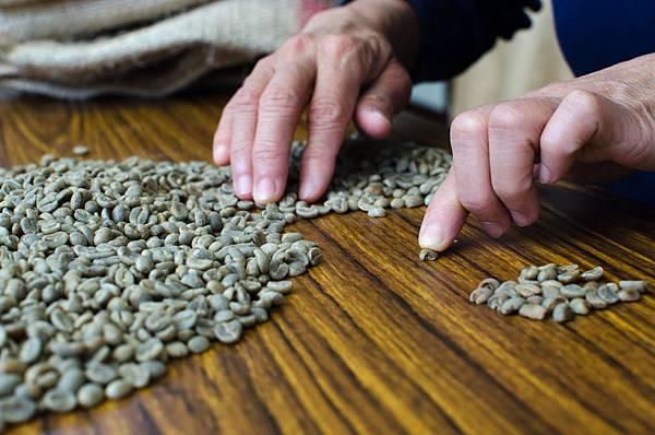 咖啡挑壞豆