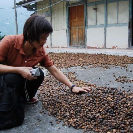 苦茶籽收購.jpg