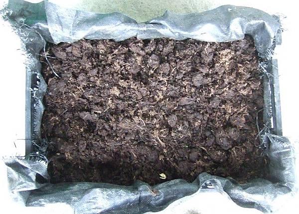 有機蔥的種法 3