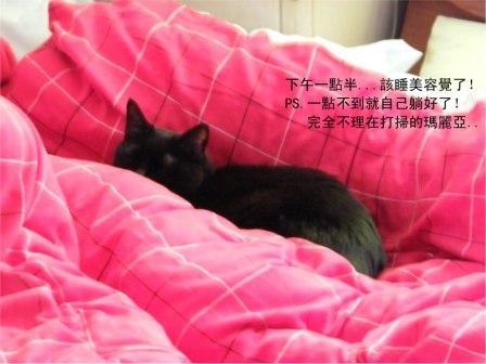 Mew20090304006-s.jpg