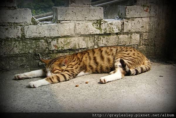 cat14.jpg