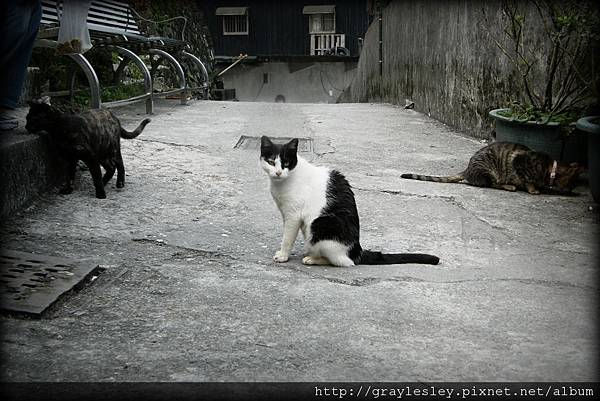 cat28.jpg
