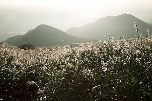 [風景攝影]陽明山大屯主峰賞芒草-6