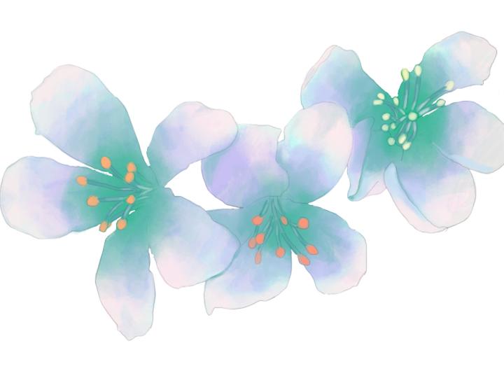 五月油桐花