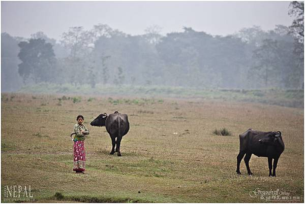 Nepal-2011-2372A