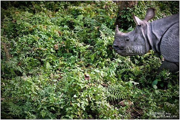 Nepal-2011-2764