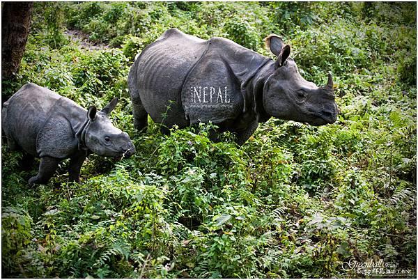 Nepal-2011-2775