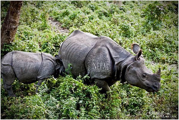 Nepal-2011-2778
