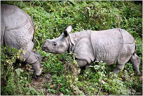 Nepal-2011-2787