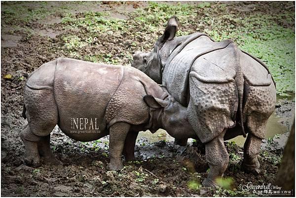 Nepal-2011-2853