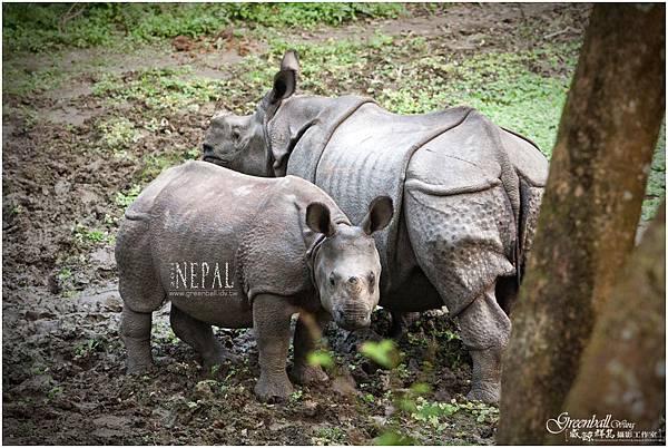 Nepal-2011-2868