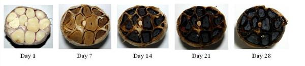 fermentation process.jpg