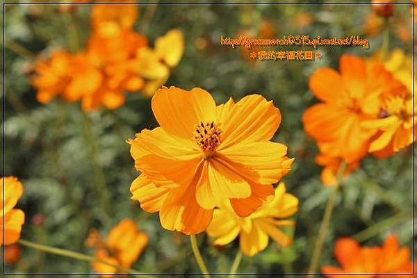 IMG_2038 (620x413).jpg