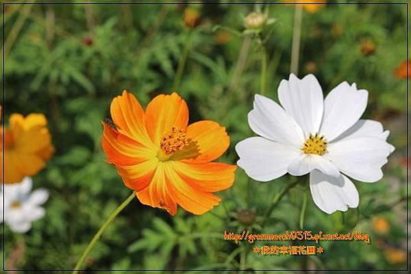 IMG_2044 (620x413).jpg