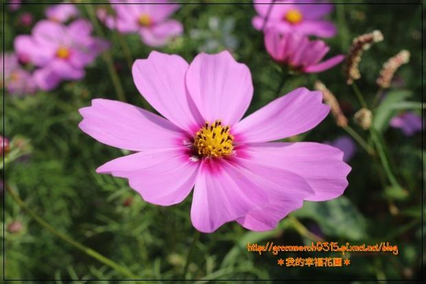 IMG_2069 (620x413).jpg