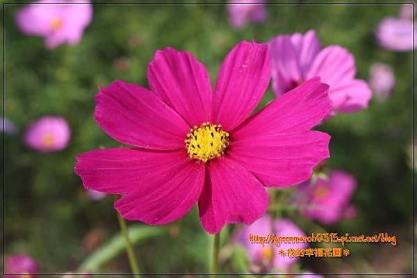 IMG_2079 (620x413).jpg