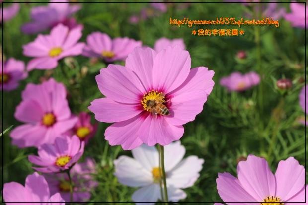 IMG_2081 (620x413).jpg