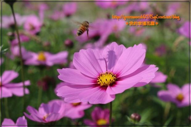 IMG_2084 (620x413).jpg