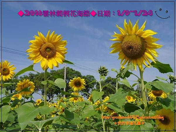 P8880226 (620x465).jpg