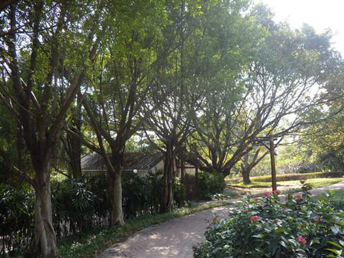深圳公園 2
