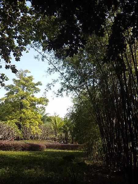 深圳公園 4
