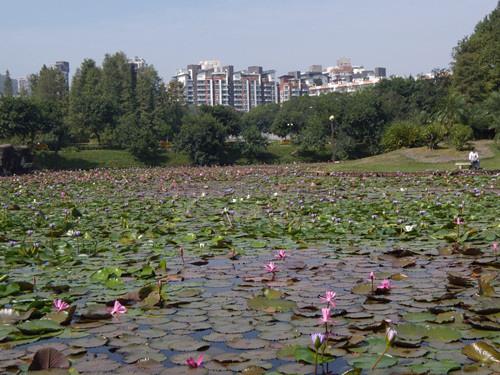 深圳公園 13