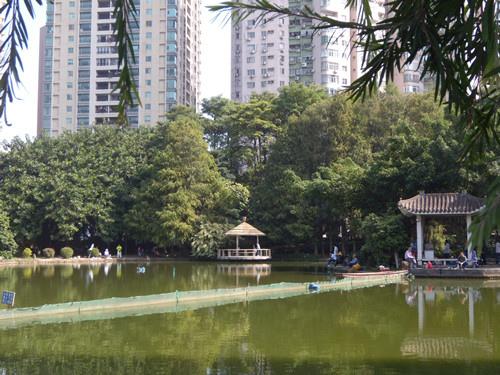 深圳公園 15