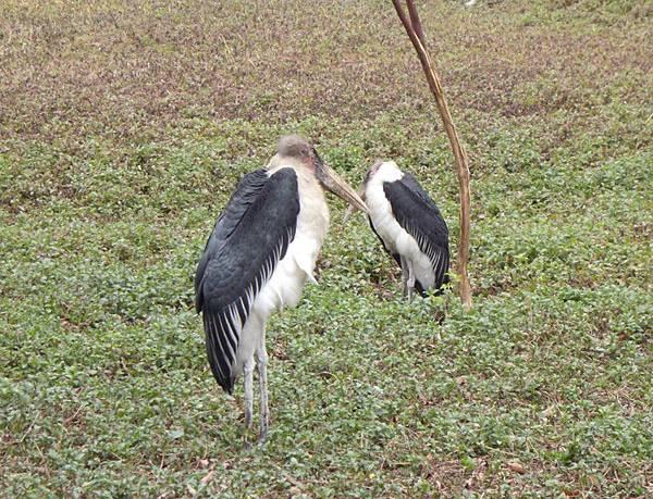 長隆野生動物園