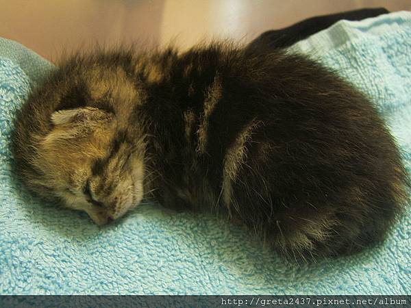 我最喜歡貓咪睡覺的時候捲成一團的樣子^^