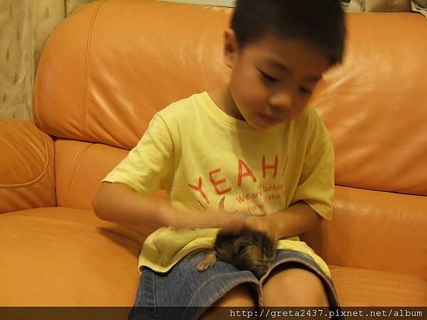 我兒子很怕狗狗,狗狗太熱情...貓咪他很愛,看他的表情多溫柔...