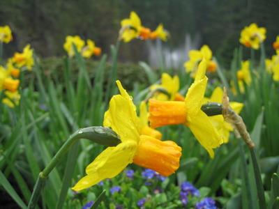 布查特花園-蘿絲噴泉