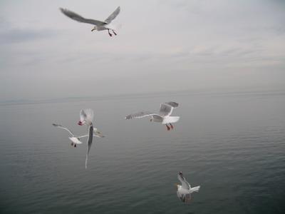 六樓的甲板上有一群爭食的海鷗
