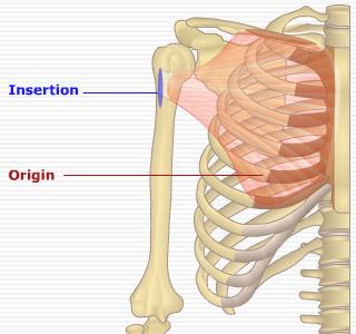 胸大肌、前三角肌、側三角肌 灰男的健身網誌 痞客邦