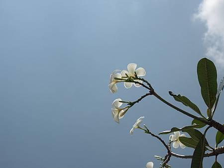 樂高遊樂園花與天空