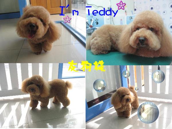 teddy美照.jpg
