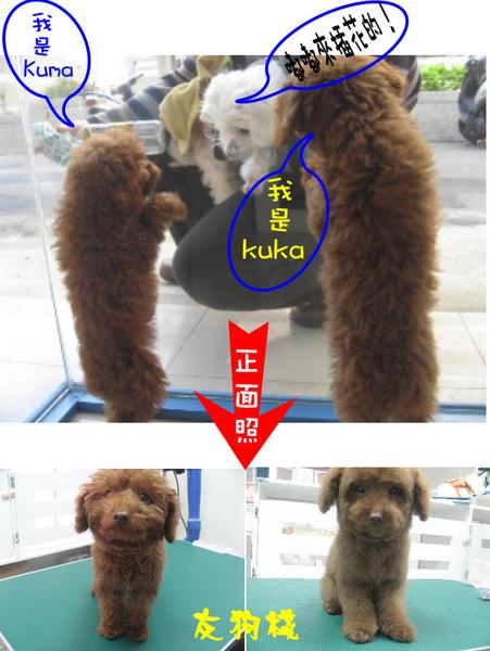 kukakuma1.jpg
