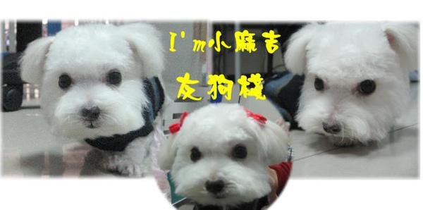 小麻吉3.jpg
