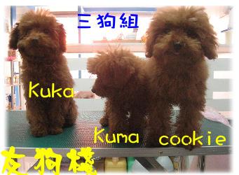 三狗組2.jpg