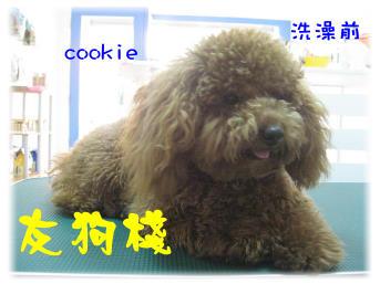 金山cookie洗澡前.jpg