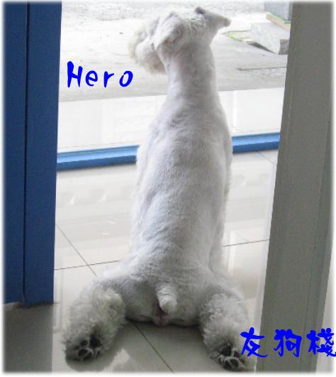 可愛坐姿hero.jpg