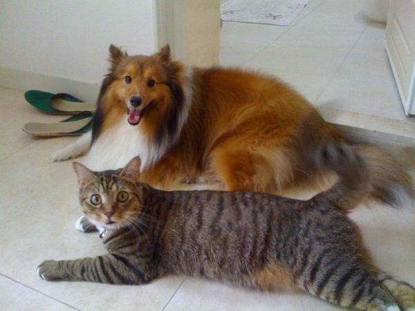 Lattie and cat.jpg