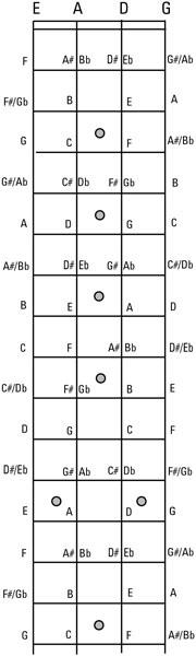 bassnote_01_02.jpg