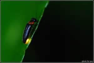 螢火蟲1.jpg