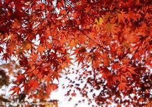 溫暖的秋天.jpg