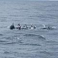 飛旋海豚的表演.JPG