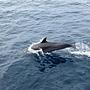 飛旋海豚的個人秀2.JPG