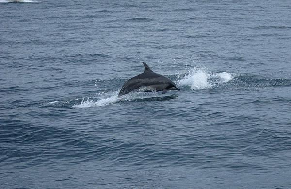海豚的個人秀.JPG